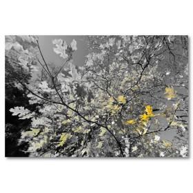 Αφίσα (μαύρο, λευκό, άσπρο, φύλλα, φθινόπωρο)